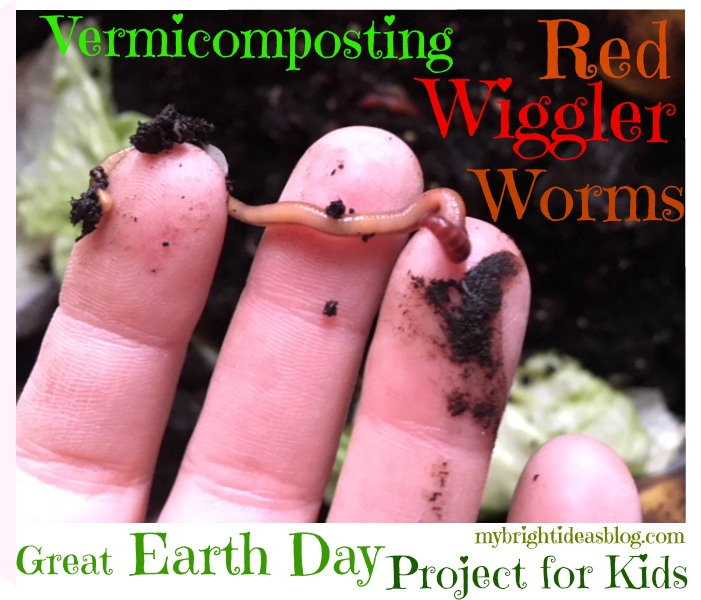 Easy Vermicomposting! How to start an indoor Worm Compost Bin! - My