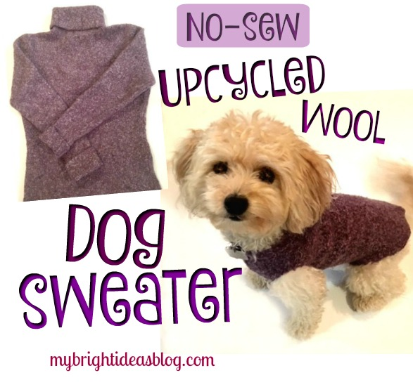 How to make a small dog sweater by upcycling a wool sweater. Easy to make and no sewing! mybrightideasblog.com